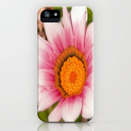 Southern African White ❁ Purple Gazania Flower iPhone Case