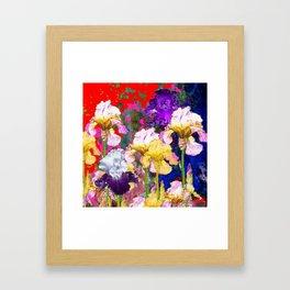 Yellow & Purple Spring Red Iris Garden Framed Art Print