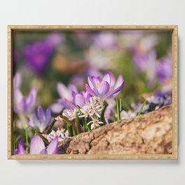 Crocus Flower - Spring Floral Art Serving Tray