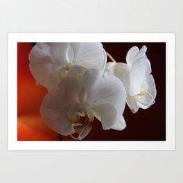 Falling Orchids Art Print