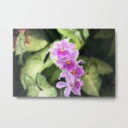 Longwood Gardens Orchid Extravaganza 61 Metal Print