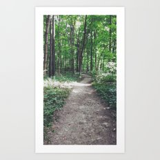 trails Art Print