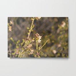 Outback flowers Metal Print