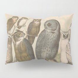 Naturalist Owls Pillow Sham