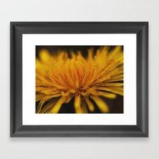 yellow, yellow dandelion Framed Art Print
