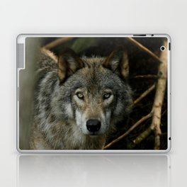 Timber Wolf Laptop & iPad Skin