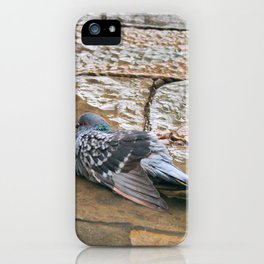 Pigeon in Puddle Photography iPhone Case