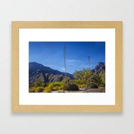 Desert Flowers in the Anza-Borrego Desert State Park, Southern California Framed Art Print