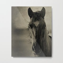 BREEZE  - Old Friends Collection Metal Print