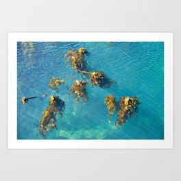 Kelp Copse Art Print