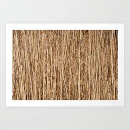 Thousands of reeds Art Print