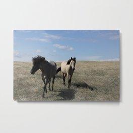 Mustangs follow Metal Print