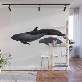 False killer whale Wall Mural