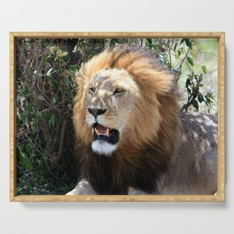 African Lion Serving Tray