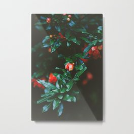 Pomegranate Study, No. 1 Metal Print