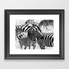 Zebras in Maasai Mara Framed Art Print