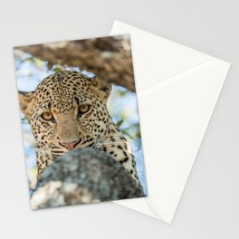 Serious look Stationery Cards
