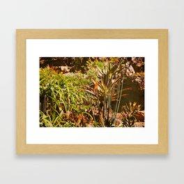 vintage garden in a hot sunny summer day Framed Art Print