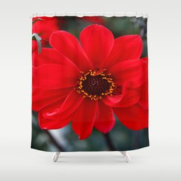 Red Red Dahlia Shower Curtain