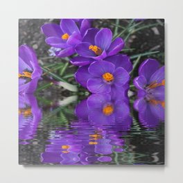 Crocus Reflections Metal Print