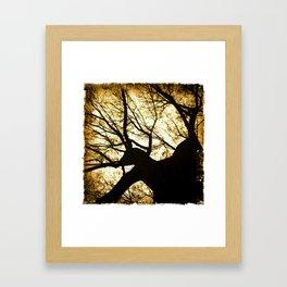 light in fall Framed Art Print