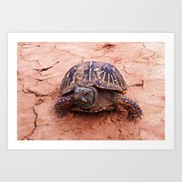 palo alto Art Prints featuring Palo Duro Canyon Turtle by Sterling Silver Sees