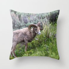 Big Horn Ram Throw Pillow