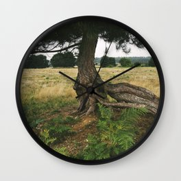 Pine tree (Pinus sylvestris) with an exposed and twisted trunk. Norfolk, UK. Wall Clock
