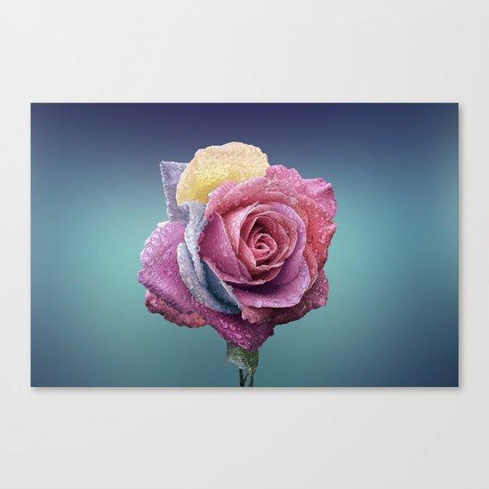 pastel rose Canvas Print