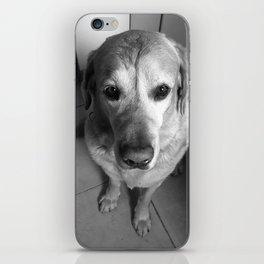 Lab Dog iPhone Skin