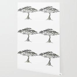 Whistling Thorn , Zen Bonsai African Tree Wallpaper