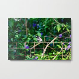 The Curiosity of a New Holland Honey Eater Metal Print