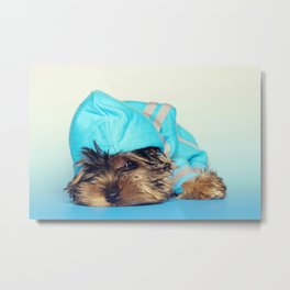 Lazy Yorkshire Terrier Metal Print