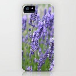 Lavender in field iPhone Case