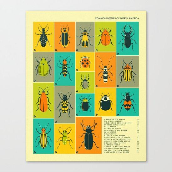 COMMON BEETLES OF NORTH AMERICA Canvas Print