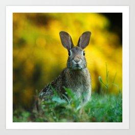 Rabbit   Lapin Art Print