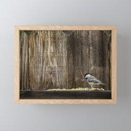 Carolina Chickadee - All This For Me? Framed Mini Art Print