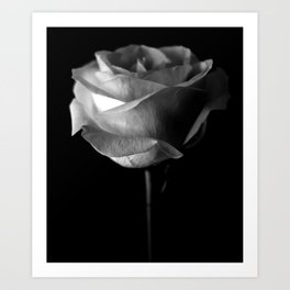 Dark Rose Art Print