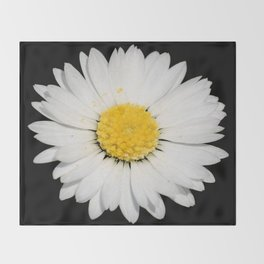 Nine Common Daisies Isolated on A Black Backgound Throw Blanket
