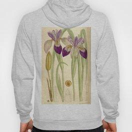 Iris clarkei 136 8323 Hoody