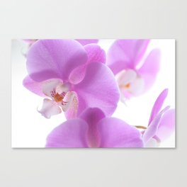Orchidae Canvas Print