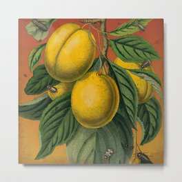 Plums with Bugs Metal Print