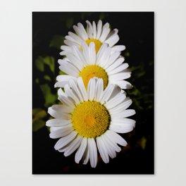 Daisy Cascade Canvas Print