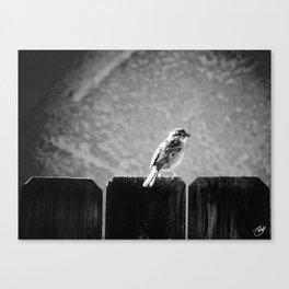 Sparrow BW Canvas Print