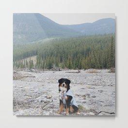 wild dog Metal Print