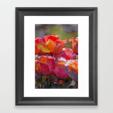 Romantic roses(9). Framed Art Print