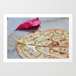 Water drops on leaf Art Print