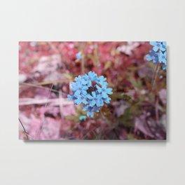 Blue Flowers, Red Thorns ~ Cedars of Lebanon, Tennessee Metal Print