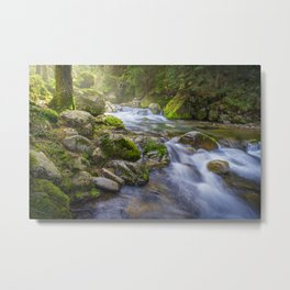 Forest moss with stream Metal Print
