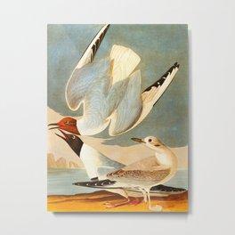 Bonapartian Gull John James Audubon Vintage Scientific Bird Illustration Metal Print